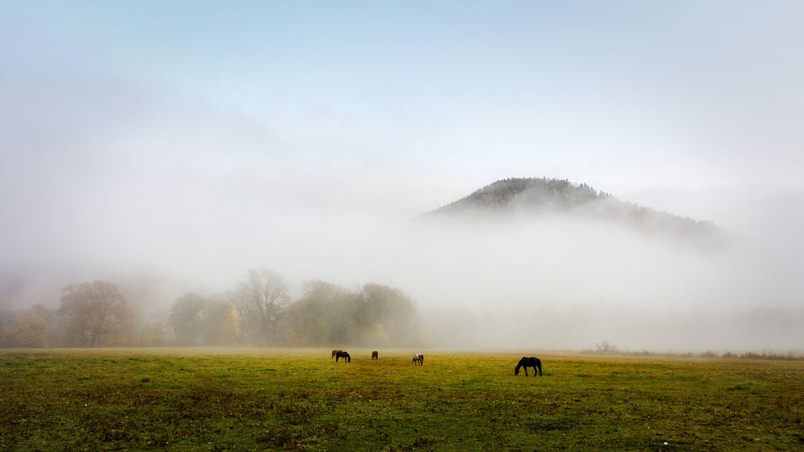 Herd of horses in a thick fog in the autumn in the feald
