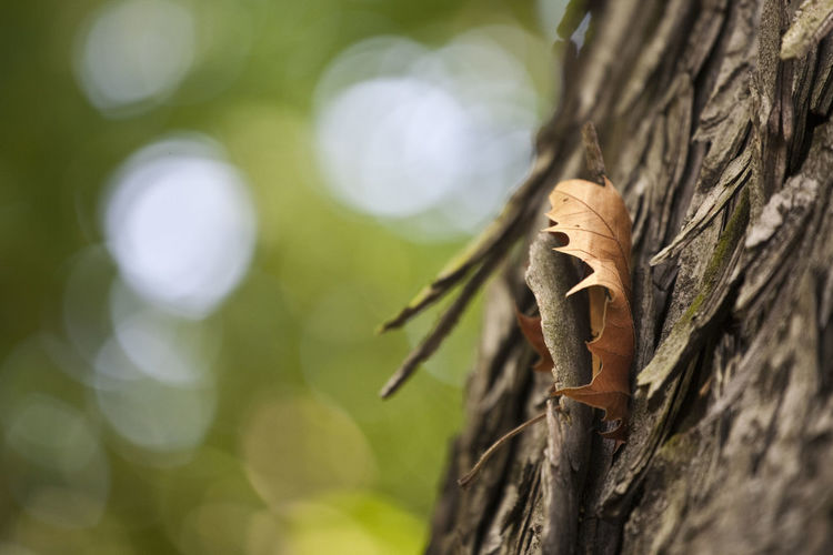 Autumn Bubbles Green Color Light Tranquility Beauty In Nature Bildfolge Branch Close-up Day depth of field Dof Focus On Foreground Leaf Nature No People Outdoors Photography Pinched Plant Plant Bark Selective Focus Tree Tree Trunk Trunk