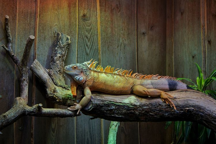 Reptile Animal Wildlife Lizard Animals In The Wild One Animal Animal Themes Iguana No People Sunday Blue Sky Travel Beauty In Nature Reptile Backgrounds Indoors  Water Nature Berlin, Germay A6000 Full Frame Animals In The Wild Outdoors Day Nature Close-up