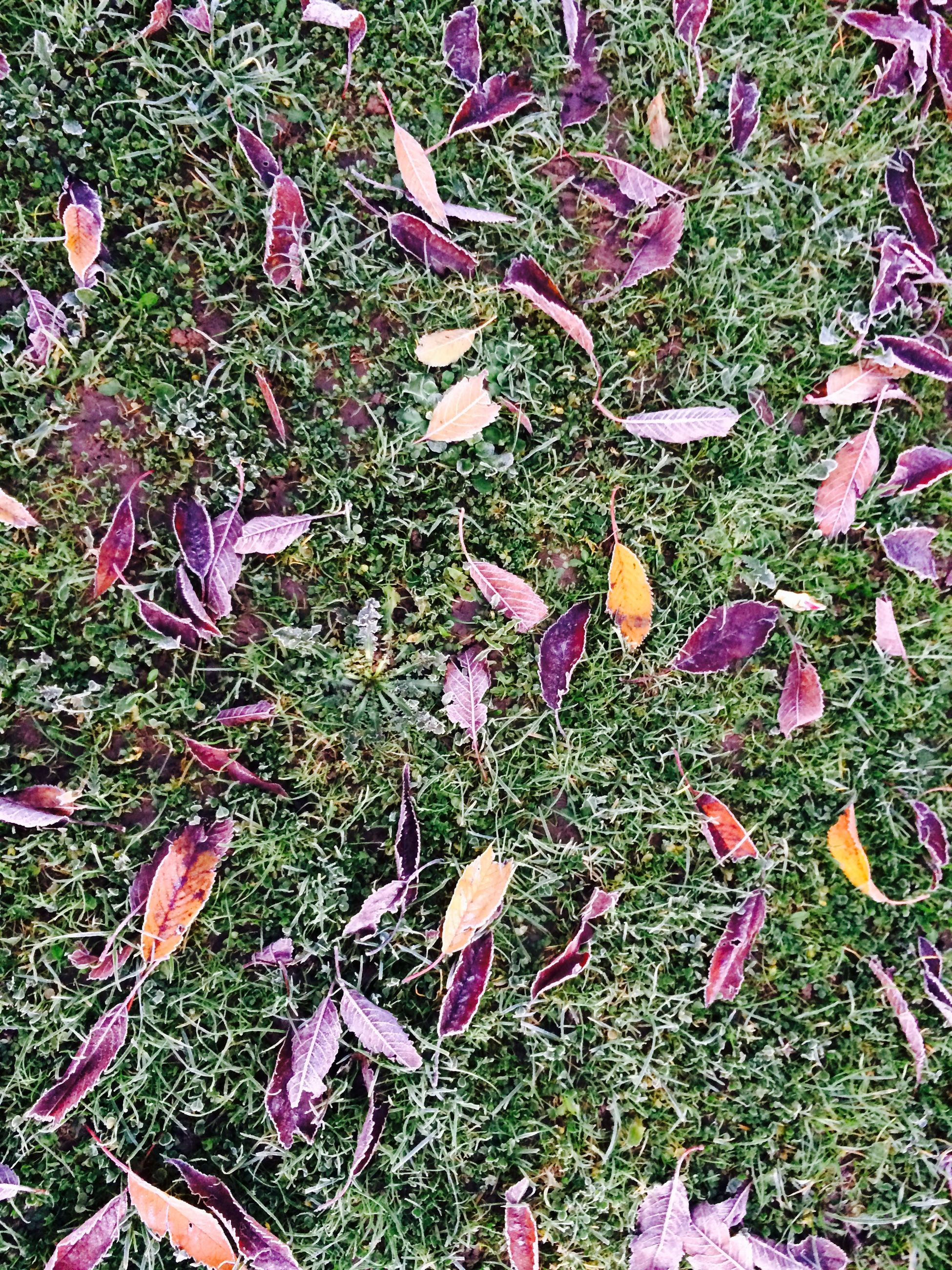 field, leaf, grass, high angle view, growth, nature, plant, autumn, beauty in nature, change, fallen, dry, day, tranquility, green color, outdoors, season, grassy, leaves, no people