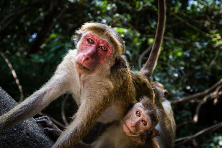 Portrait of monkeys on tree