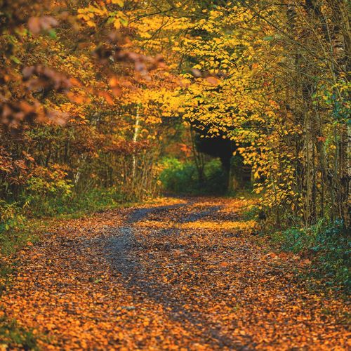 Footpath amidst trees during autumn