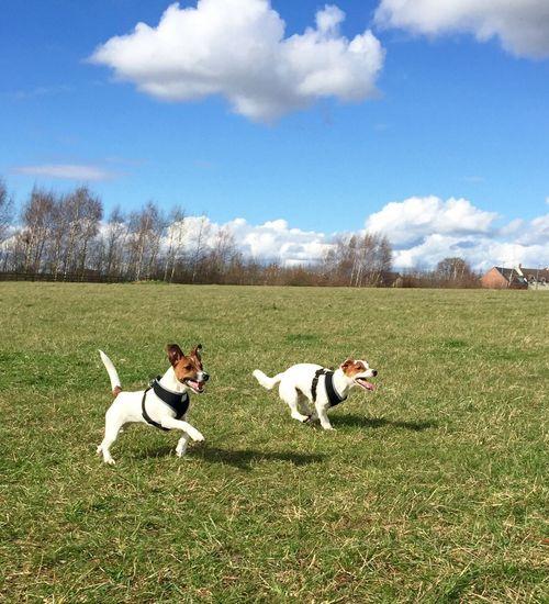 Dogs running on grassy field against sky