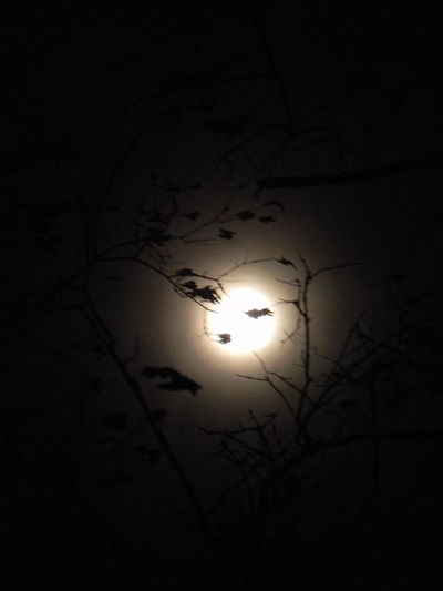 Beauty In Nature Bright Night Dark Full Moon Haunted Haunted Woods Low Angle View Moon Moon Moon Light Moonlight Nature Night Night Time No People Outdoors Silhouette Sky Solar Eclipse Supermoon
