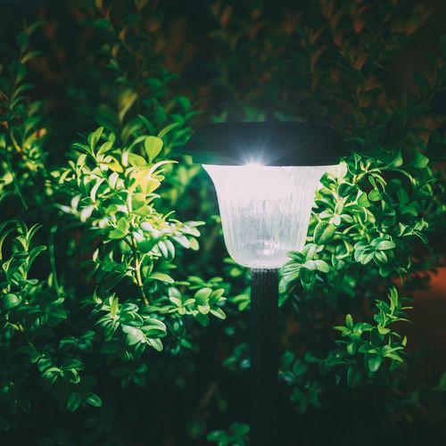 Close-up of illuminated light against trees
