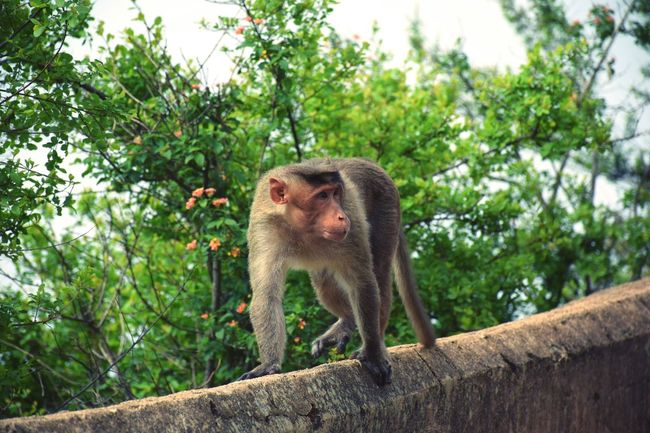 Tree One Animal Mammal Monkey Animal Themes Outdoors Nature Nature Photography India Bangalore