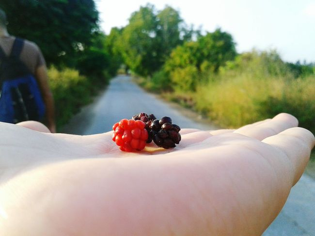 Roadtrip Fruit Nature Freshness Healthy Eating Outdoors Summer Food Sky