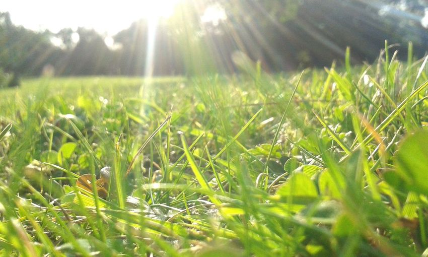 Simpleedit Green Grass Sunshine Close-up Nature Nature Photography Naturelovers Takenbyme Eyemphotography Takenwithmyphone