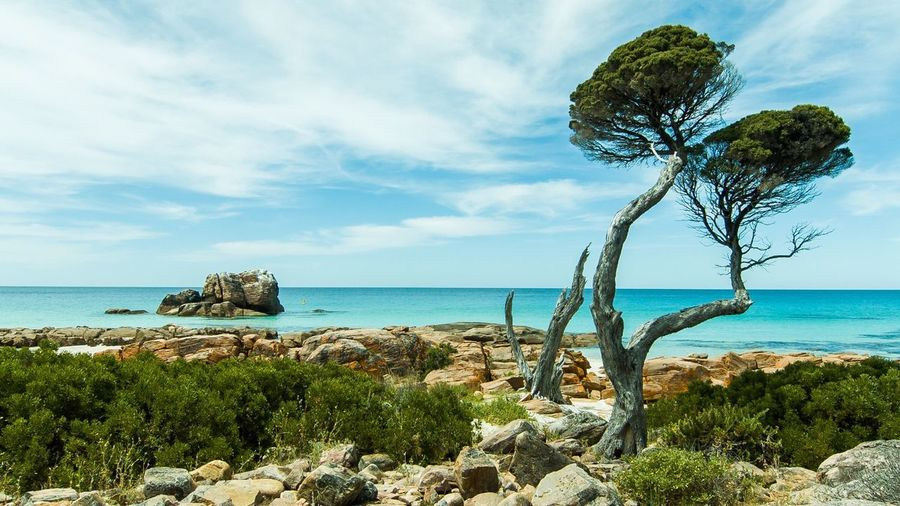 The hot land meets the cool ocean Landscape Australia Beach Tree