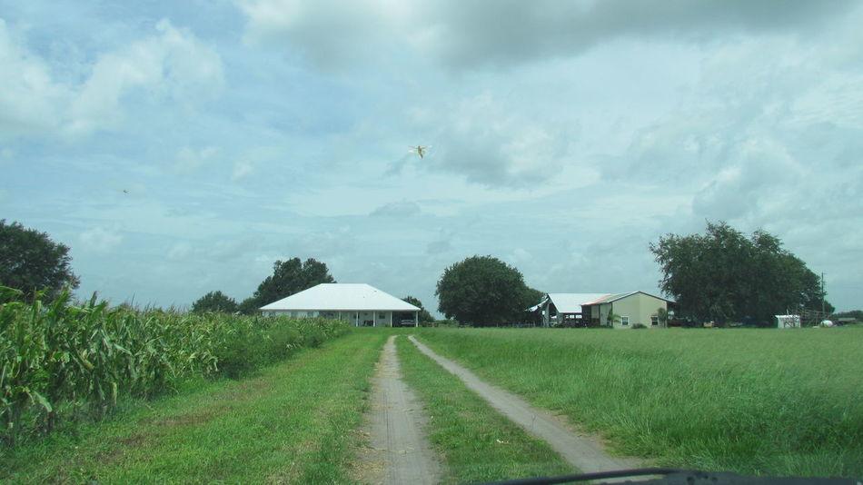 Road Way Jorney Home House Barn Field Corn Corn Field Day Way Home Farmer Life