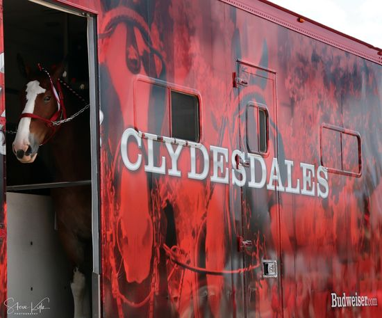 Anheuser-Busch Clydesdales Animal Themes Close-up Communication Day Domestic Animals Mammal No People Outdoors Red Text