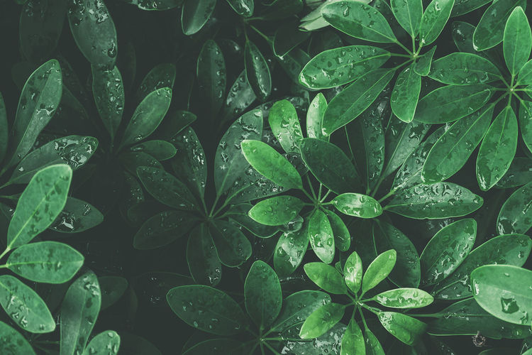 Backgrounds Beauty In Nature Close-up Clover Day Dew Drop Freshness Full Frame Green Color Growth High Angle View Leaf Leaves Nature No People Outdoors Plant Plant Part Purity Rain RainDrop Rainy Season Water Wet