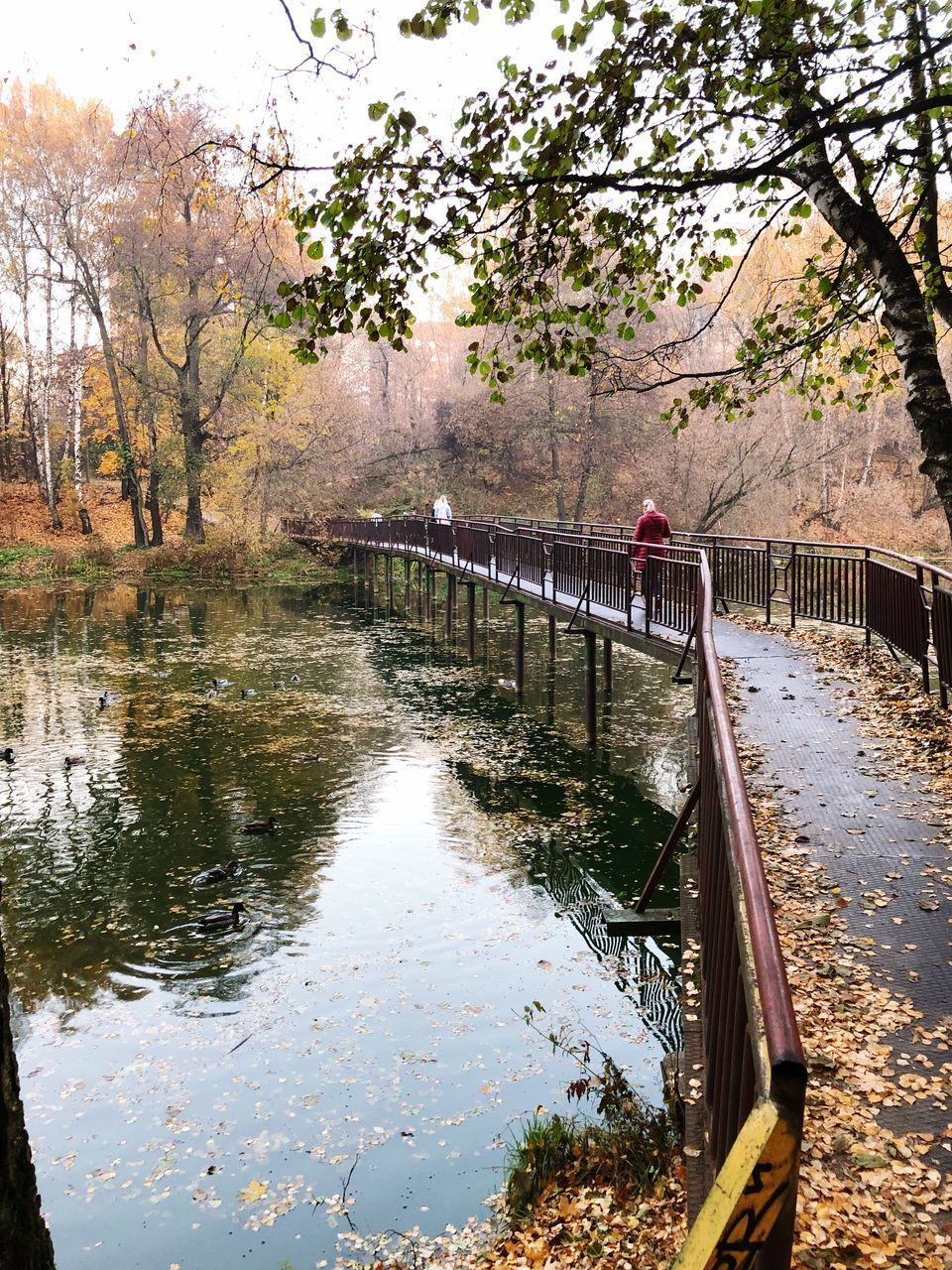 water, tree, plant, connection, bridge, nature, reflection, day, railing, built structure, architecture, bridge - man made structure, canal, transportation, no people, beauty in nature, autumn, footbridge, outdoors, change