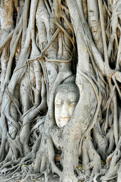 EyeEm Selects Ancient Full Frame Bas Relief No People Close-up Outdoors Day Roots Of Tree Buddha Head Religion Sculpture Buddha Statue In Thai Buddha Head In Tree Roots, Wat Mahathat, Ayutthaya