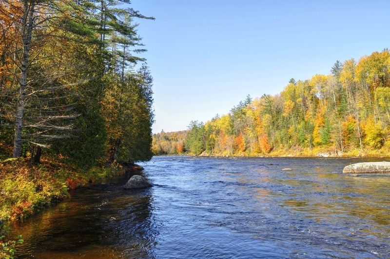 Scenic view of river in forest against clear sky during autumn