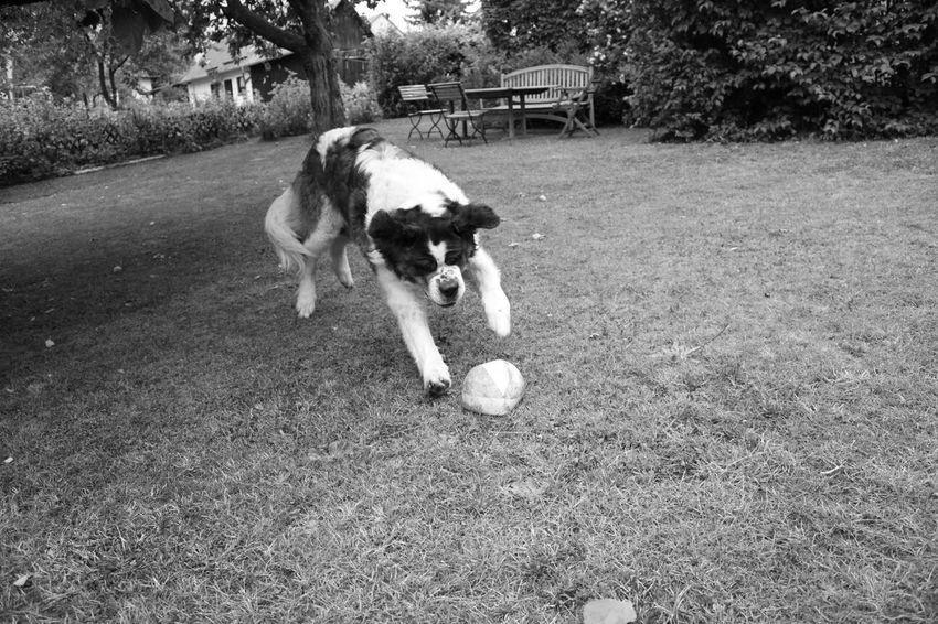 Happy Dog . Sunday.Bernhardiner. Hello World