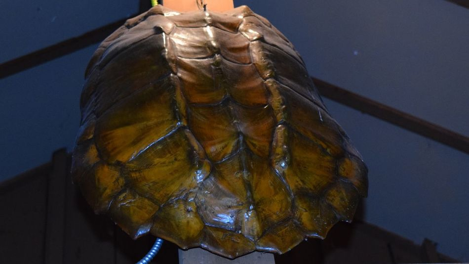 Sapping Turtle was over 100lbs, caught out of the Alabama River near Montgomery ...Nature Shells🐚 Snapping Turtle Turtle Shell Turtles Alabama Alabama River Jake's Fish Camp Burkville Alabama Alabama Fishing