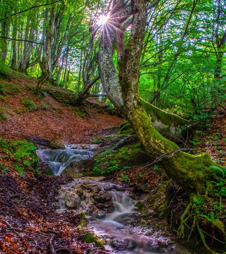 Magical forest. Nature Photography Nature Croatia Long Exposure Wilderness Tree Water Forest Tree Trunk Waterfall Branch Moss Lush Foliage WoodLand Landscape Stream - Flowing Water Flowing Water Root Tree Area Shining