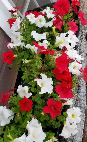 Flower Red Growth Fragility No People Freshness Plant Nature Day Outdoors Beauty In Nature Close-up Flower Head Greenhouse Basket Of Flowers 🌷