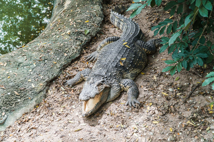 High angle view of lizard on tree trunk