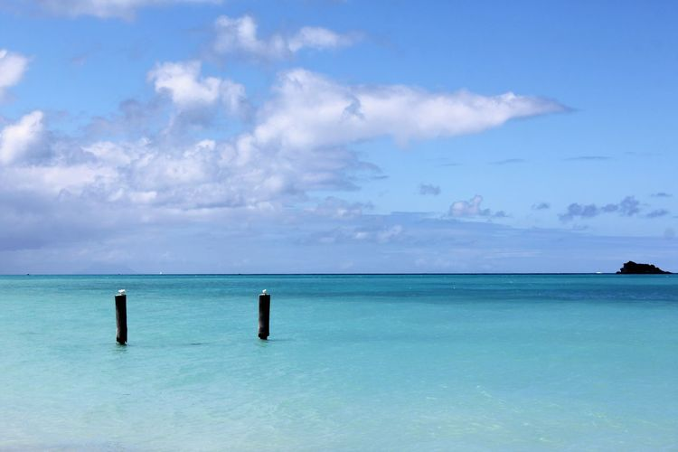 Seagulls sitting on Poles in the Caribbean Sea Beauty In Nature Caribbean Island Caribbean Life Caribbean Sea Day Horizon Over Water Nature No People Outdoors Pole Scenics Sea Seagulls Seagulls And Sea Sky Turquoise Water Turquoise Water Color Water