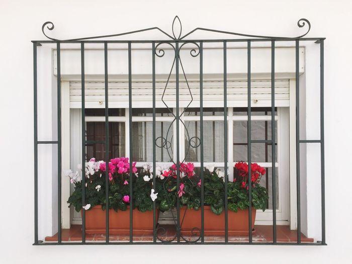 Flower plants against window