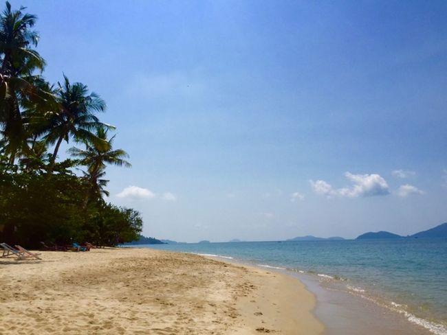 Thailand Beach Palm Trees