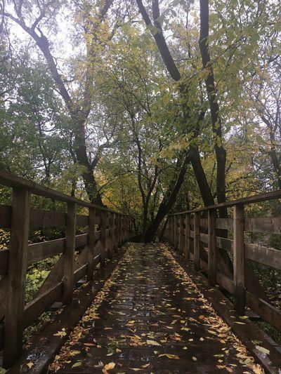 Narrow footbridge along trees