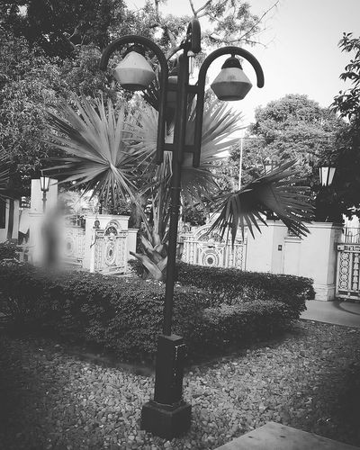 Day Outdoors Tree Sky Trees Black And White Collection  MonochromePhotography Bnw Photography Black And White Collection  Monochrome India Lamp Post Photo Garden Monochrome _ Collection Trees And Sky Grass Stoney Path Black And White Collection  Kolkata Blackandwhite Blackandwhite Photography City Black And White