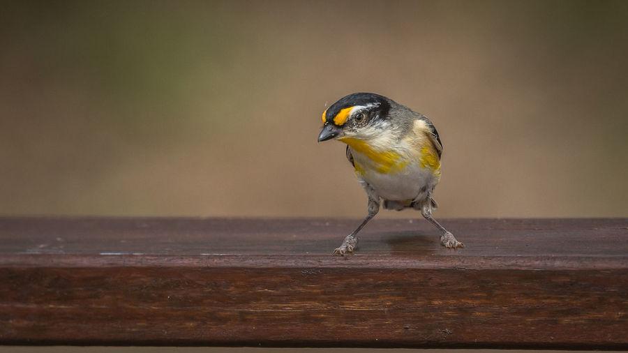 Close-up of bird perching on bench
