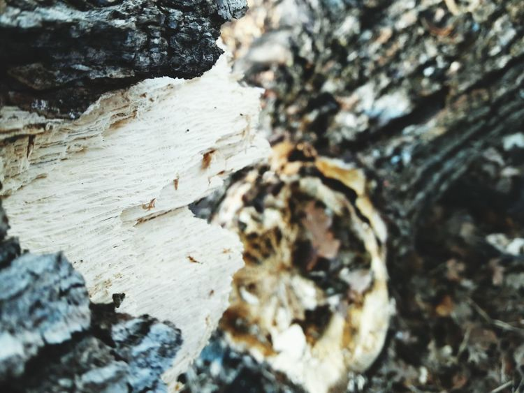Textured  Tree Trunk Wood - Material Tree Rough Outdoors No People Nature Day Close-up Tree Stump Beauty In Nature Animal Themes Branch Tree Fragility Growth Low Angle View Backgrounds