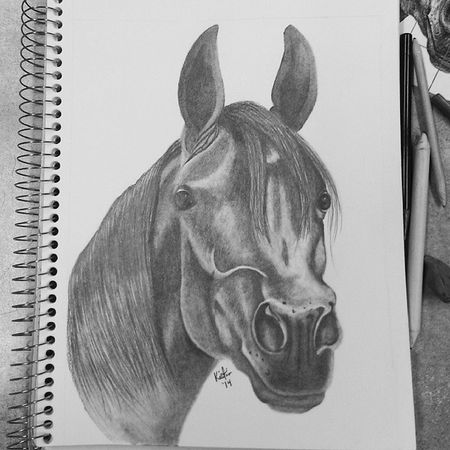 Art ArtWork Drawing Sketchaday sketch photooftheday horses mammals beautiful instagram pretty