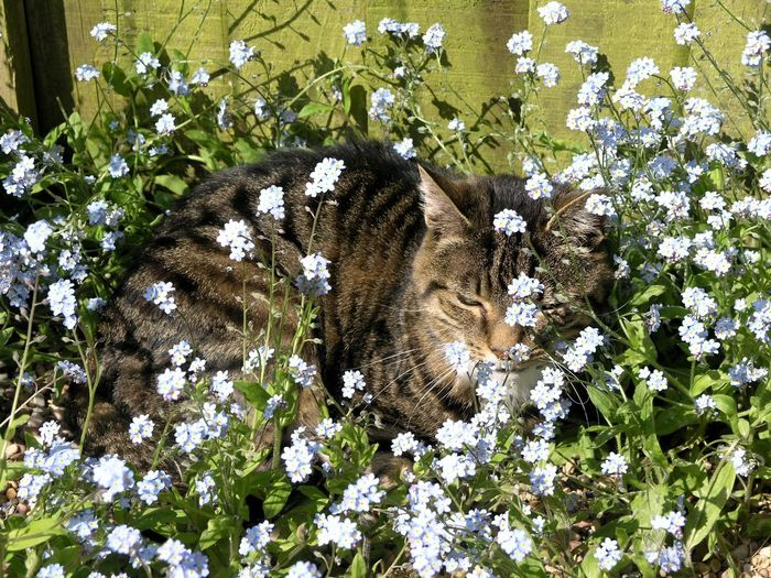 High angle view of cat amidst flowering plants