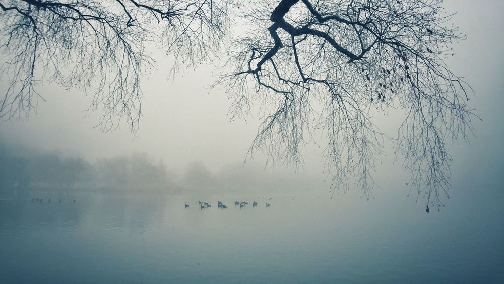 Birds Distant Fog Horizon Lake Majestic Nature Peaceful Prospect Park Reflection Silhouette Tranquil Scene Tranquility Tree Trees Waterscape