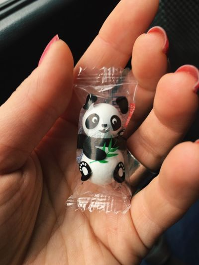 🐼 Panda Pandashots Panda Lover Good Shot Nice Cute Animals Cute Sweet Moments Sweet Chocolate Tasty