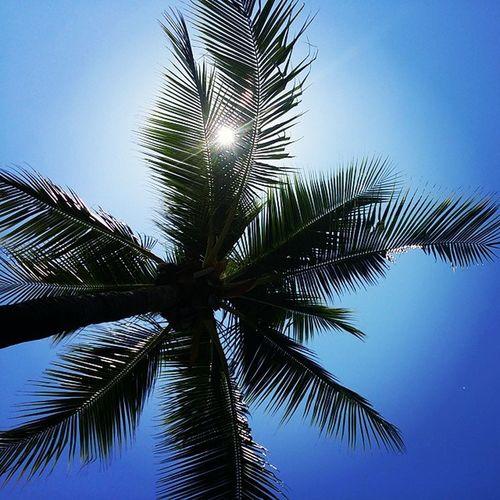 My view for the next 6 hours.... ⌚ Killingtime Palmtree Rtw Esplanade Sunbathing Travelling