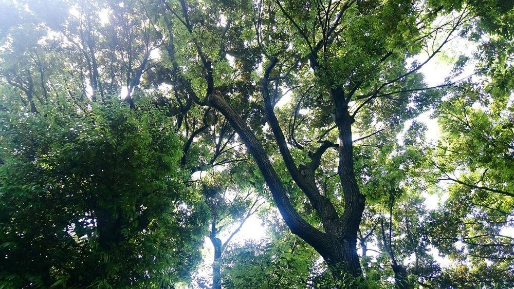 Trees Komorebi