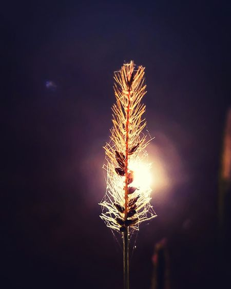 Just a little flare on the water, reflecting the light of sunset through a reed. Close-up Beauty In Nature Illuminated Nature
