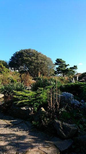 Nature Southsea Rock Gardens Garden Border Winter Sun Blue Shadow Day Outdoors No People Sky Clear Sky Tree