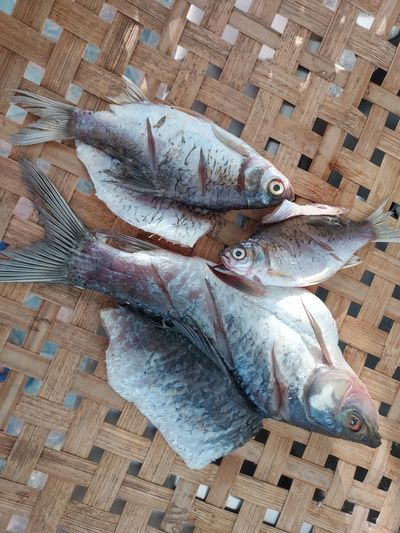 High angle view of fish in basket