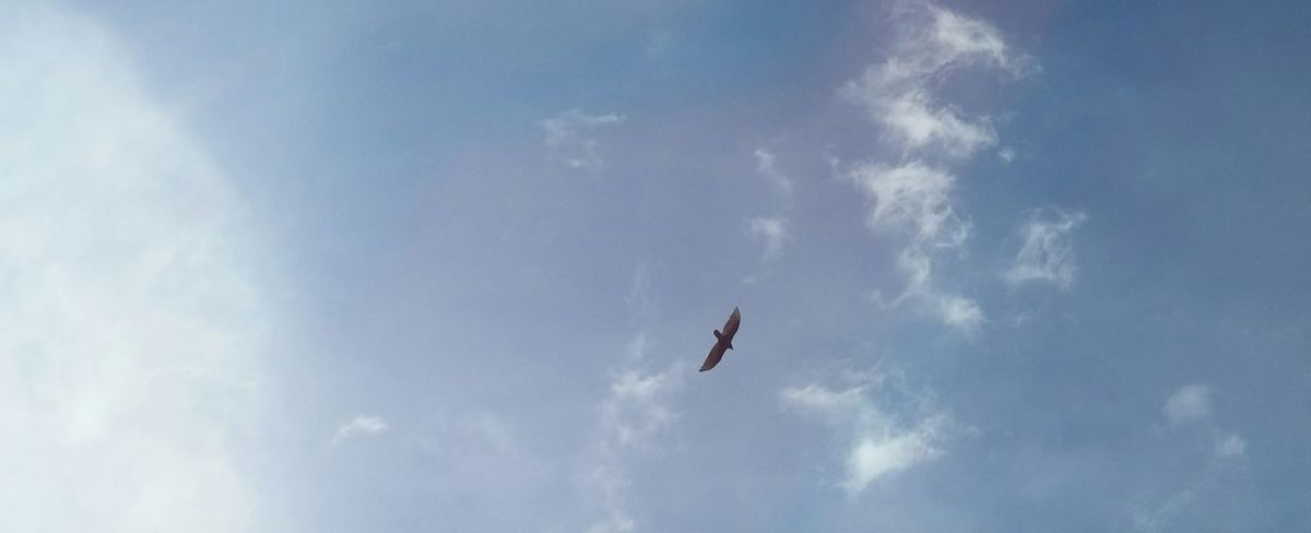 Nature No People Day Outdoors Flying Sky Skyporn Stormy Clouds Bird In Flight Birds Of Prey Birds In The Sky Cloud And Sky Storm Clouds Gathering Beauty In Nature Love To Take Photos ❤ Nature Rural Scene Cloud - Sky Blue Predatory Bird Preditor