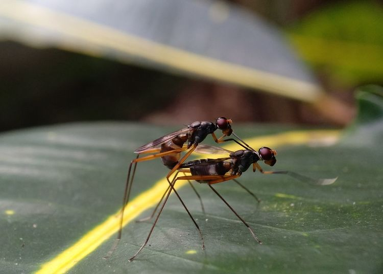 Close-up of insects mating on leaf
