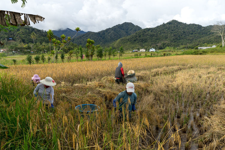 Farmers working on agricultural field