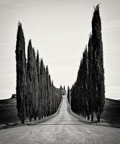 Cipressi Day Nature Outdoors The Way Forward Tree Tuscany Tuscany Countryside