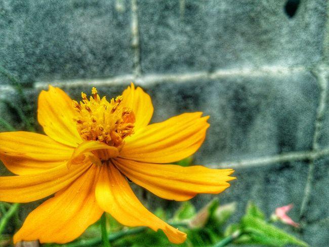 Flower Fragility Petal Flower Head Freshness Beauty In Nature Growth