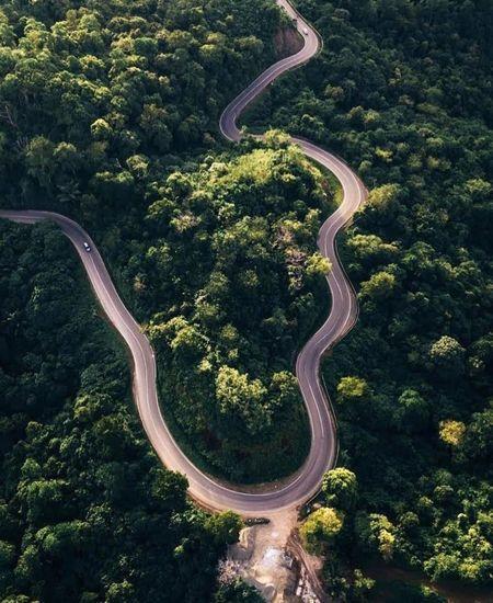 High angle view of an animal on road