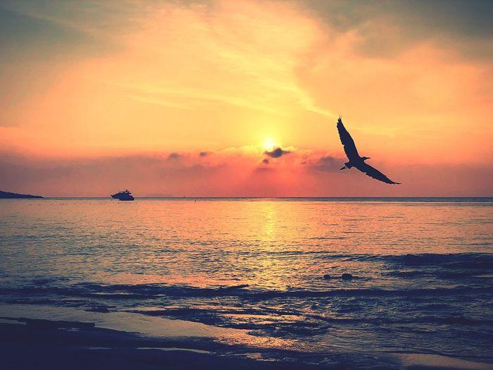 Early Bird Sky