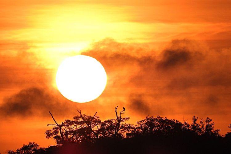 Sun Sunset Silhouette Scenics Tranquil Scene Nature Dramatic Sky Solitude A Bird On A Branch
