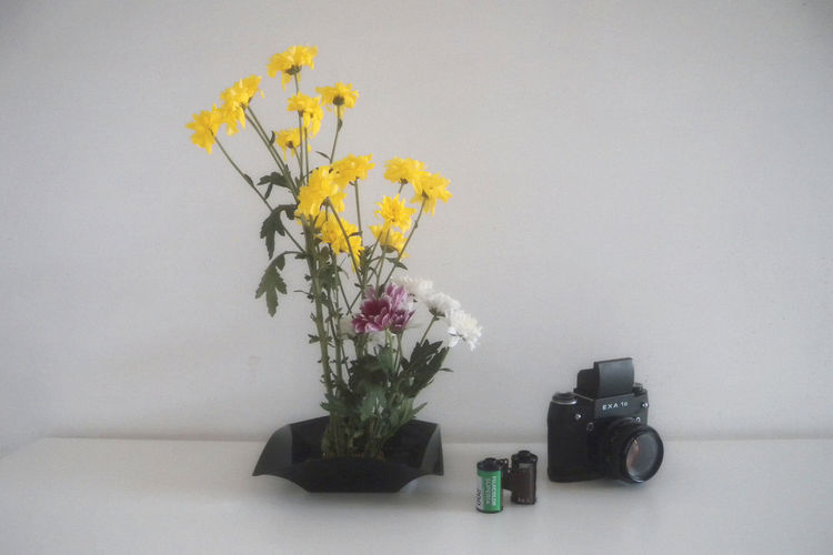 Analog Camera Analogue Photography Bouquet Composition Decor Decoration Flower Flower Arrangement Flower Collection Flowers Home Home Interior IKEBANA Indoors  Interior Nature Plant Still Life Vase Vintage Vintage Camera White Background Yellow Yellow Flower 生け花 Paint The Town Yellow