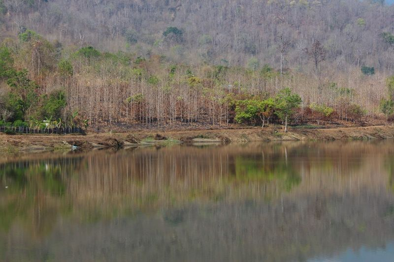 Lake View Forest Reflection Fall Season Landscape Outdoors No People Watercolor in North Thailand South East Asia